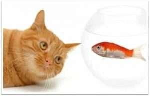 gatto-con-pesce-rosso