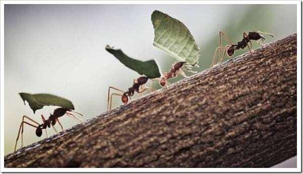 formiche al lavoro