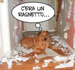 cane che nega