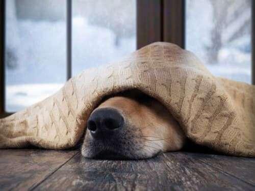 cane spaventato 3